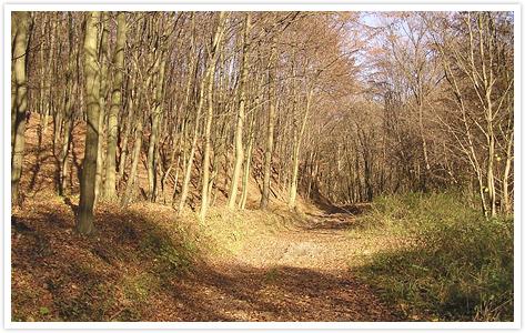 Őszi erdő, 2010